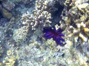 Biota laut yang hidup di kawasan Pulau Lamun. (Foto/Dani Randi)
